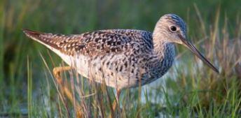 A bird in a wetland